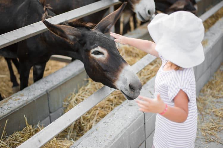 Ферма осликов «Golden Donkeys» - достопримечательности Ларнаки