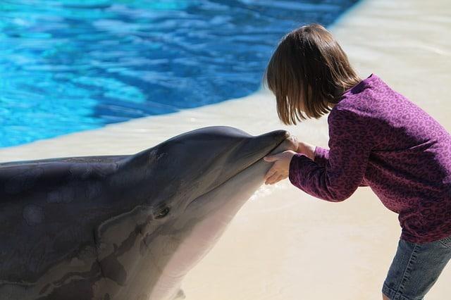 Дельфинарий - достопримечательности Мармариса