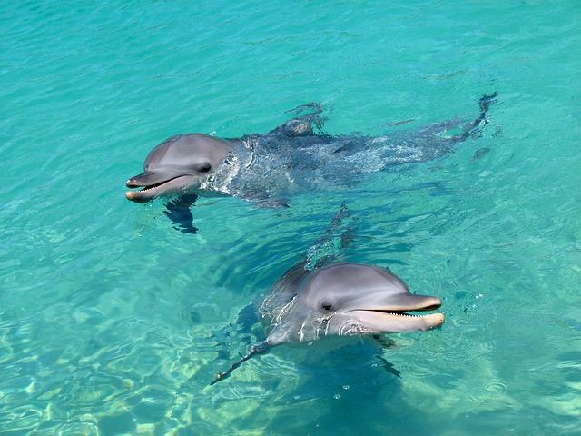 Дельфинарий Nemo - достопримечательности Пхукета