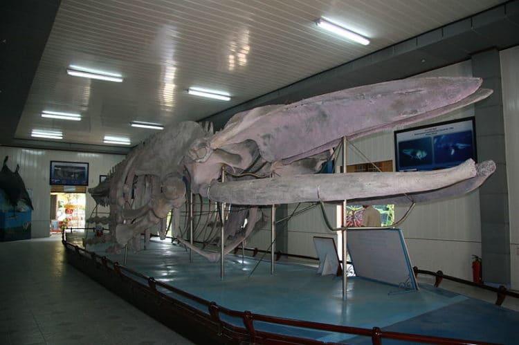 Институт океанографии - достопримечательности Нячанга